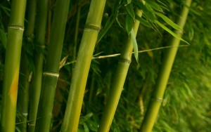 bamboo_wallpaper_plants_nature_1122.jpg